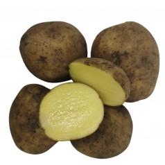 Jutlandia Læggekartofler -- 10 Kg.