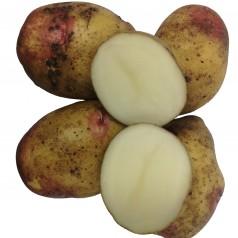 King Edward læggekartofler - 2 Kg.