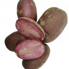 Lily Rose Læggekartofler - 2 Kg.