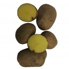 Marabel Læggekartoffel –- 10 Kg.