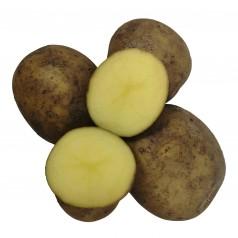 Maya Læggekartofler -- 10 Kg.