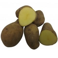 Økologiske Læggekartofler Milva -- 25 Kg.
