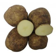 Royal Læggekartofler - 2 Kg.