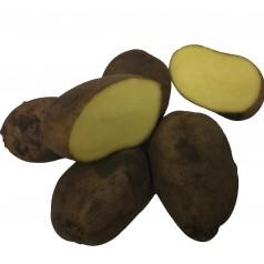 Økologiske Læggekartofler Sava -- 10 Kg.