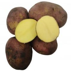 Senna Læggekartofler - 2 Kg.