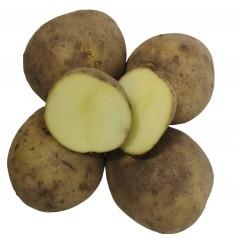 Økologiske Læggekartofler Solist -- 25 Kg.
