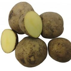 Økologiske Læggekartofler Twister -- 25 Kg.