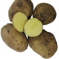 Økologiske Læggekartofler Vitabella -- 10 Kg.