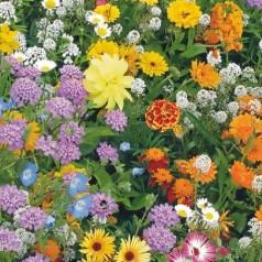 Blomsterblanding frø 'Bi venlig'