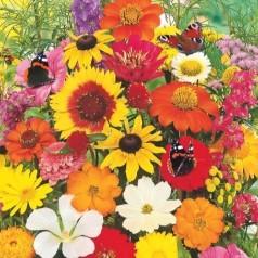 Blomsterblanding frø 'Sommerfugl'