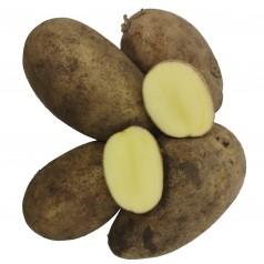 Darling Læggekartofler - 10 Kg.
