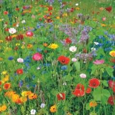Blomsterblanding frø 'Sommerblomster