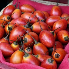 Tamarillo - Solanum betaceum