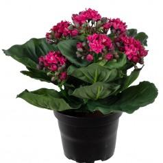 Brændende Kærlighed - Lilla - Kunstige potteplante