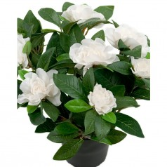 Gardenia - Hvid - Kunstig potteplante