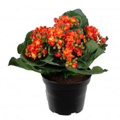 Brændende Kærlighed - Orange - Kunstig potteplante
