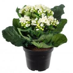 Brændende Kærlighed - Hvid - Kunstig potteplante