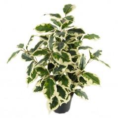 Ficus variegata - Kunstig potteplante