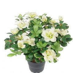 Azalea - Hvid - Kunstig potteplante
