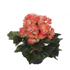 Begonia - Abrikos - Kunstig potteplante
