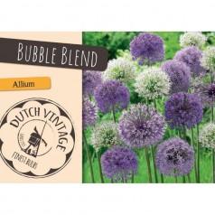 Prydløg Bubble Blend - Allium / 15 Løg