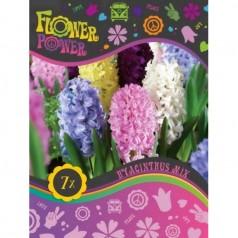 Hyacintløg Mix - 7 stk - FlowerPower