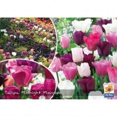 Tulipanløg - Blanding Midnight Moments - 30 Løg