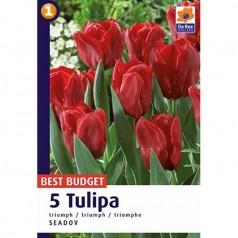 Tulipanløg Seadov / Tulipan - 5 Løg