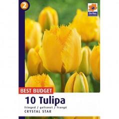 Tulipanløg Crystal Star / Tulipan - 10 Løg