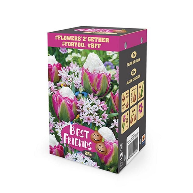 Blomsterløg blanding - Raspberry Sundae - 25 løg