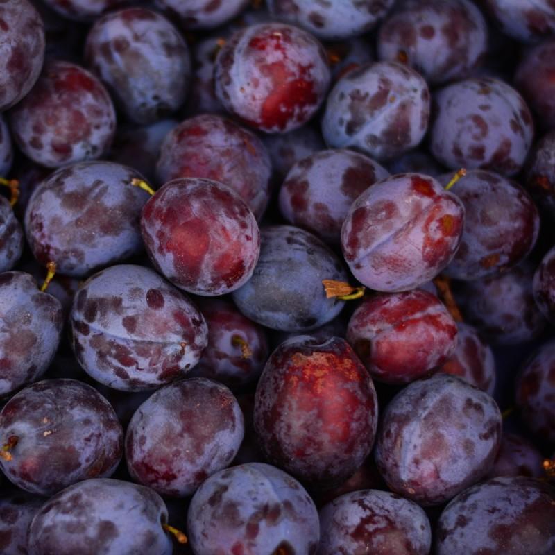 Søjleblomme Mirouge - Prunus domestica Mirouge