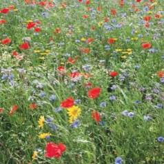 Blomsterblanding frø 'Vilde blomster'
