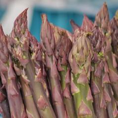 Asparges plante Crimson Pacific