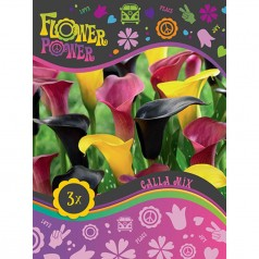 Calla Mix - 3 løg - FlowerPower