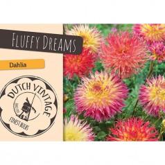 Dahlia Fluffy Dreams - Georgin 2 stk - Dutch Vintage