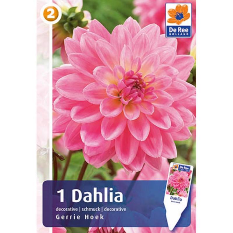 Dahlia Decorative Gerry Hoek - Georgin