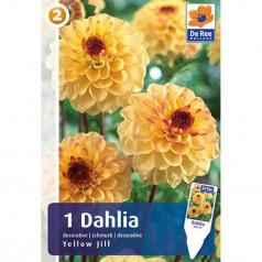 Dahlia Decorative Yellow Jill - Georgin