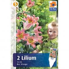 Trælilje Lilium Tree Lily On Stage - 2 Løg