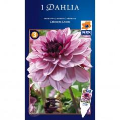Dahlia Decorative Creme de Cassis - Georgin