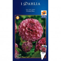 Dahlia Ball Marble Ball - Georgin