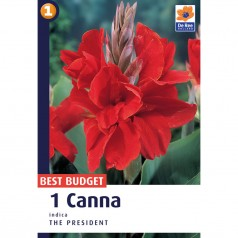 Canna The President