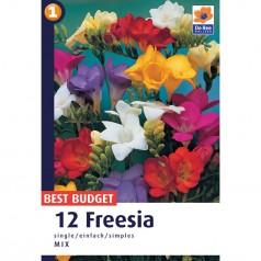 Freesia Mix enkelt - 12 løg