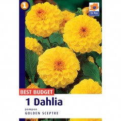 Dahlia Pompon Golden Sceptre - Georgin