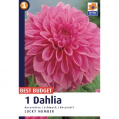 Dahlia Decorative Lucky Number - Georgin