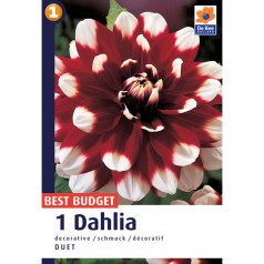 Dahlia Decorative Duet - Georgin