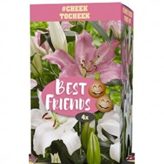 Liljer Cheek to Cheek - 4 løg Best Friends Box