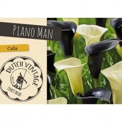 Calla Piano Man - 2 løg - Dutch Vintage
