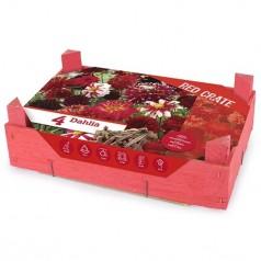 Dahlia The Red Crate - Georgin - 4 stk.
