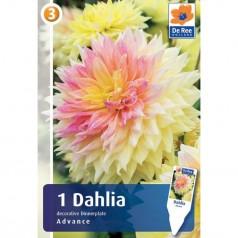 Dahlia Dinnerplate Decorative Advance / Georgin