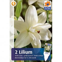 Liljer Pollenfri - Asiatic Dobbelt - Lilium Annemaries Dream - 2 løg